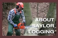Meet the Loggers